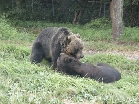 東広島市で熊の目撃情報