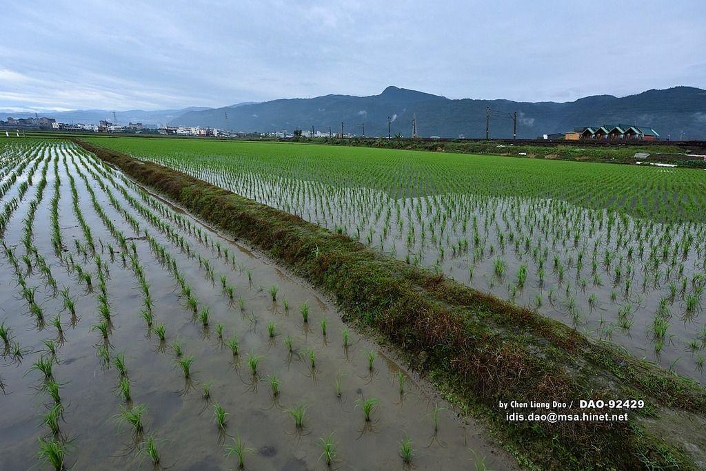 広島大学の留学生が農業体験をする