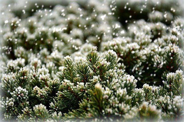 冬季休業に関するお知らせ