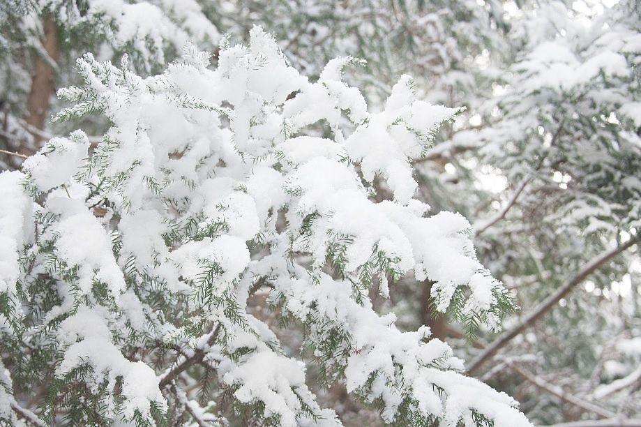 広島県の初雪はいつになるのだろうか